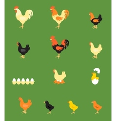 Rooster Hen Chick vector image vector image