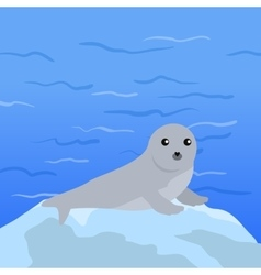 Earless seal in flat design vector