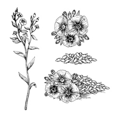 Hand drawn flax flowers and seeds vector