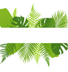 Banner with ferns tropical leaves vector