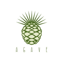 Design template of the agave plant vector