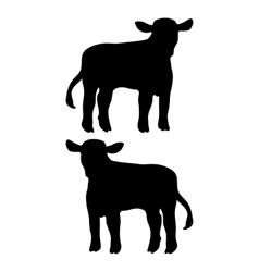 calf vector image