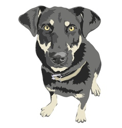 Dog posed isolated vector