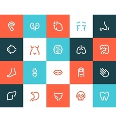 Human anatomy icons Flat style vector image vector image