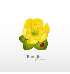 Yellow cherry flower with leaves and ladybug logo vector