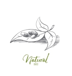 Hand drawn natural drugs made of herbs lettering vector image