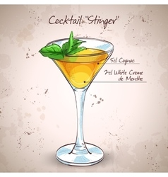 Cocktail alcoholic Stinger vector image
