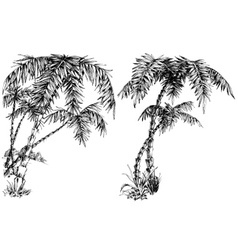 Palm trees isolated vector image