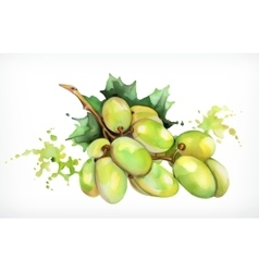 Watercolor painting grapes vector