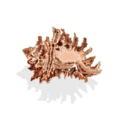 Sea shells brown and white vector
