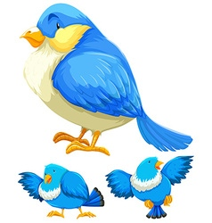 Blue bird in three different actions vector image vector image