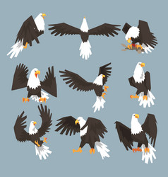 Bald eagle an image set hunting on gray background vector