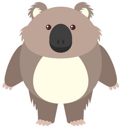 cute koala on white background vector image