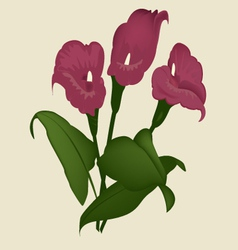 flower lily vector image vector image