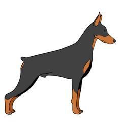 Cartoon of doberman dog vector
