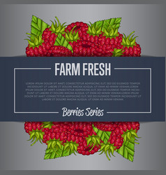 Farm fresh berry banner with juicy raspberry vector