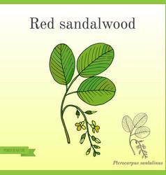 Red sandalwood branch vector