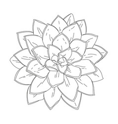 succulent doodle vector image vector image