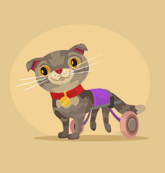 disabled cat character in wheelchair vector image vector image