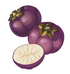 round eggplant vector image