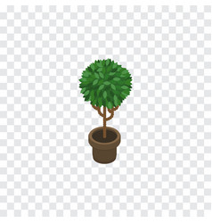 Isolated blossom isometric tree element vector
