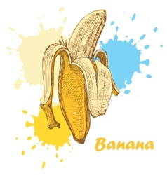 Hand draw banana vector