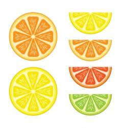 Citrus vector