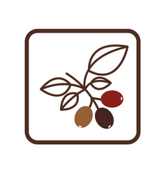 coffee tree icon image vector image
