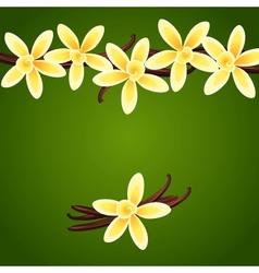 Vanilla flowers vector image