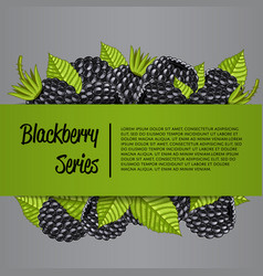 Blackberry series banner with juicy berry vector