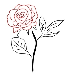 Red rose isolated on white vector