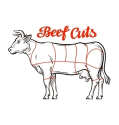 Beef chart meat cuts or butcher shop vector