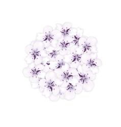 Blooming bouquet sakura blue flowers in round vector