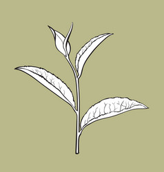 Hand drawn tea leaf side view sketch vector