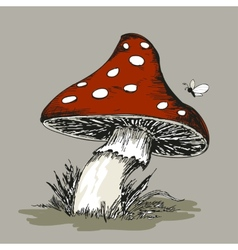 Mushroom Amanita with grass vector image vector image