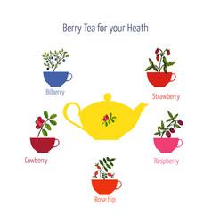 set of berry teas vector image