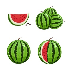 Watermelon and slice vector