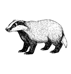 Hand drawn badger Vintage style vector image