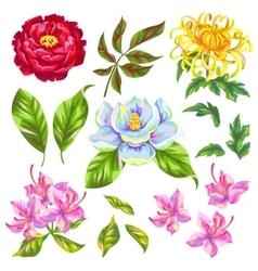 China flowers set bright buds of magnolia peony vector
