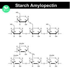 Amylopectin polymer molecular structure vector