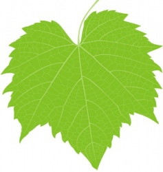 Grape leaf high detail vector