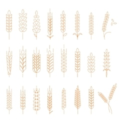 Wheat rye and barley vector image vector image