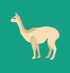 Vicuna animal vector