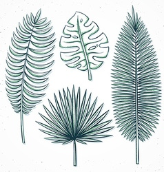 Isolated palm leaves handmade in sketch style vector