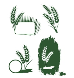 Green ears of wheat vector