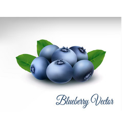 Blueberry with leaves vector