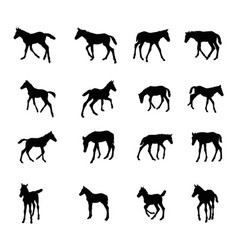 set of silhouettes of foals vector image