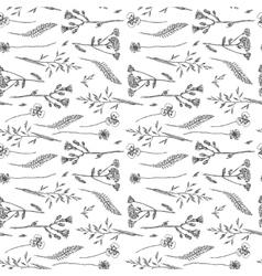 sketch of wildflower vector image vector image