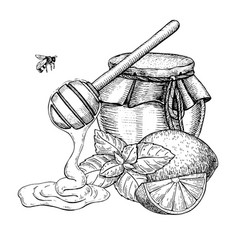 honey with lemon and mint drawing jar vector image vector image