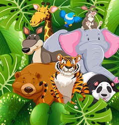 Wild animals in the bush vector